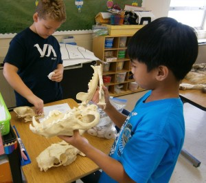 Payne Carter and Joshua Quiazon look over their wolf skull.