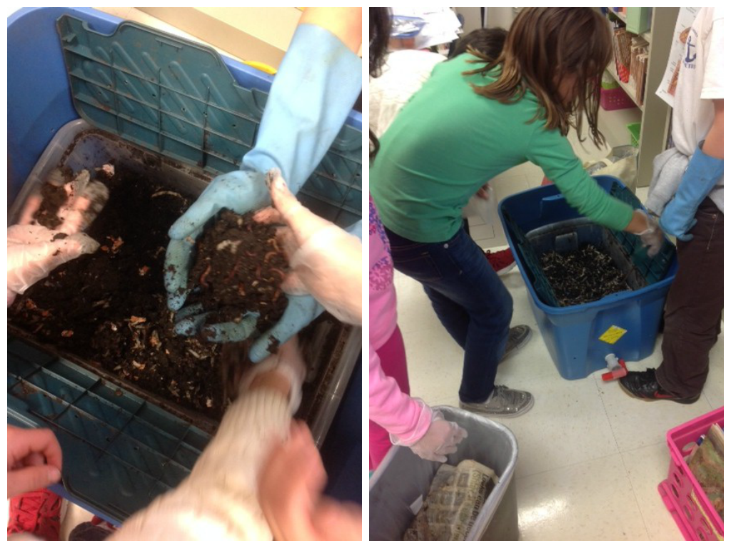Students in Mrs. O'Brien's third-grade class take care of the worm bin as they study decomposers in their Structures in Nature Unit.